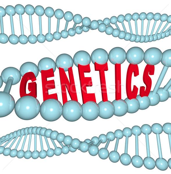 Genetics - Word in DNA Stock photo © iqoncept