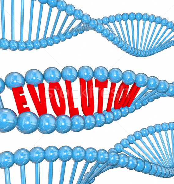 Evolution Word Letters DNA Strand Family Ancestors Genes Stock photo © iqoncept