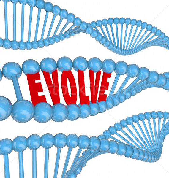 Stock photo: Evolve DNA Word Improve Enhance Get Better Growth