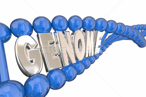 Genoom 3d illustration woord dna genetica familie Stockfoto © iqoncept