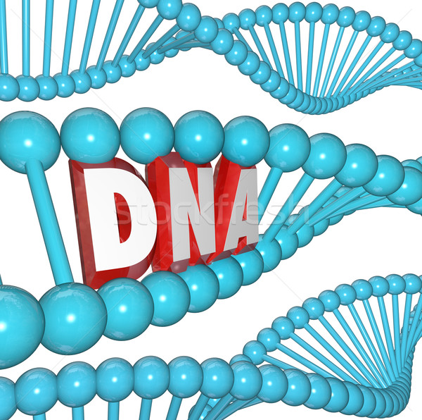 DNA Word Strand Genetics Heredity Medical Research Stock photo © iqoncept