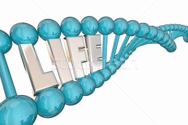 Life Word Health Care Medical Research DNA Strand 3d Illustratio Stock photo © iqoncept