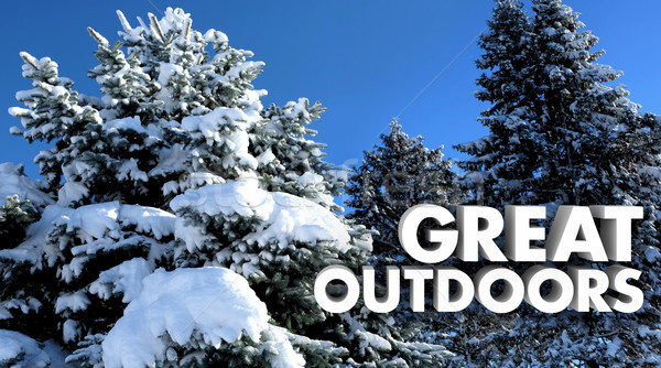 Great Outdoors Snow Covered Trees Outside Nature Words 3d Illust Stock photo © iqoncept