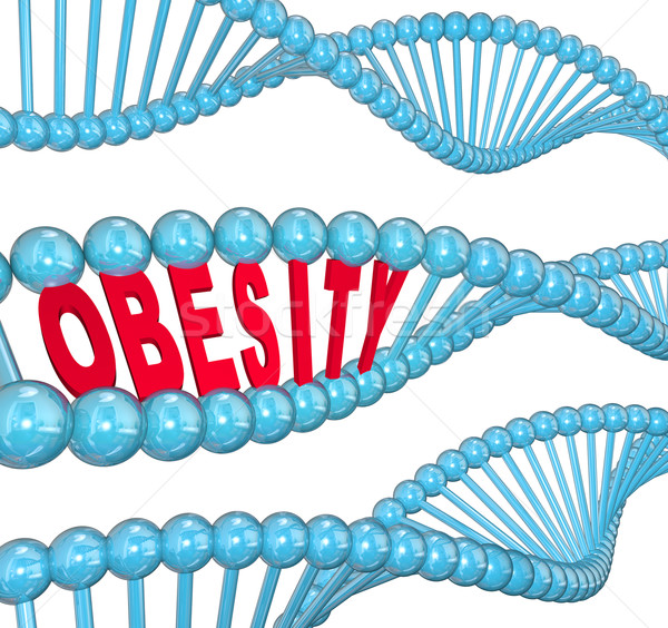 Obesity Word DNA Strand Medical Research Fat Hereditary Stock photo © iqoncept