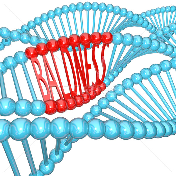 Baldness - Hereditary Genetics in DNA Strand Stock photo © iqoncept