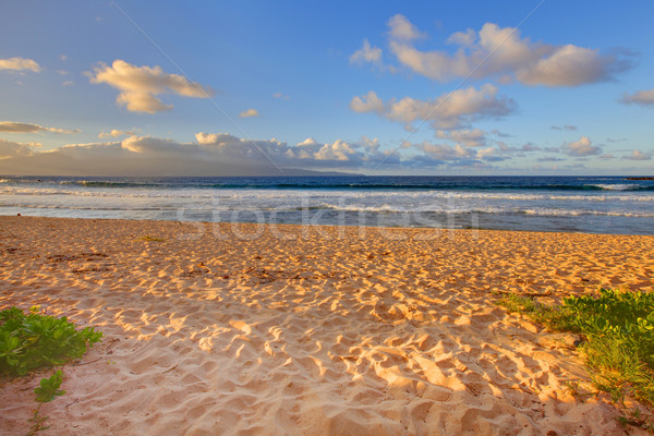 Tropical gold sand beach. Oneloa Beach, Maui, Hawaii Stock photo © iriana88w
