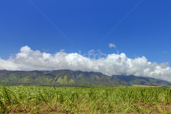 West Maui Mountain and sugar fields crops. Hawaii. Stock photo © iriana88w