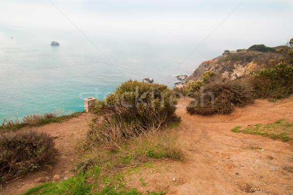 Groot Californië USA strand boom landschap Stockfoto © iriana88w