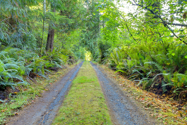 Small private country road inside of Northwest American forest. Stock photo © iriana88w