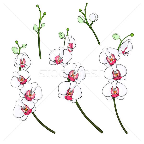 Set orchidee isolato rami fioritura colorato Foto d'archivio © Irinka_Spirid