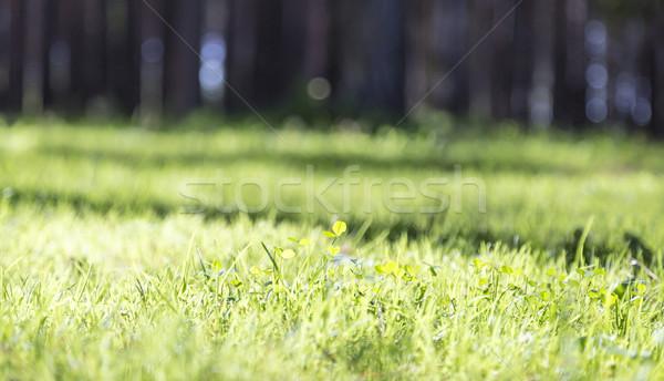 лет лес зеленый газона трава Сток-фото © ironstealth