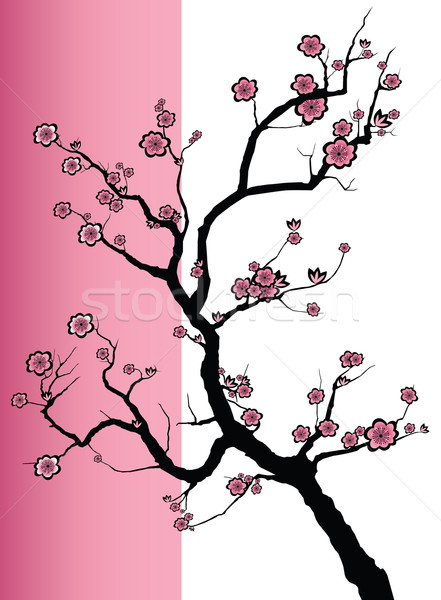 Sakura spring blossoms Stock photo © isaxar