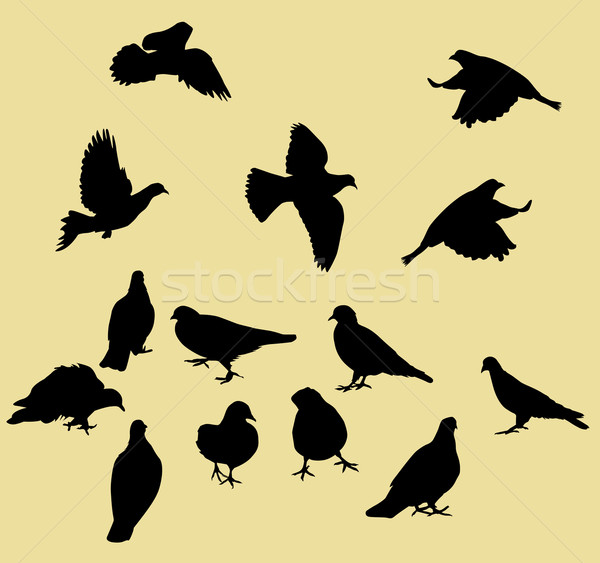 pigeons collection Stock photo © isaxar