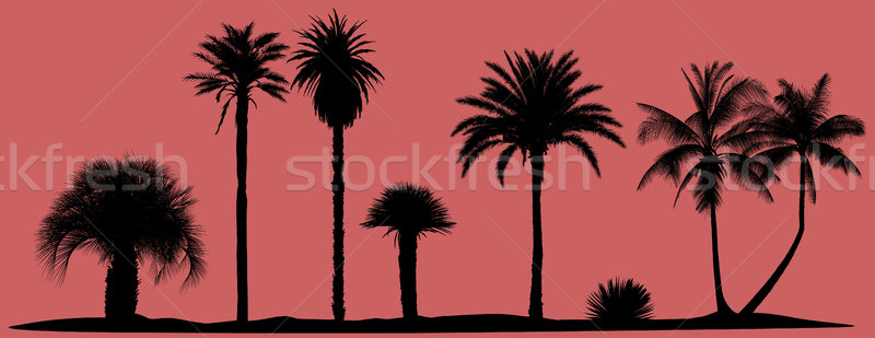 vector palm trees silhouettes Stock photo © isaxar