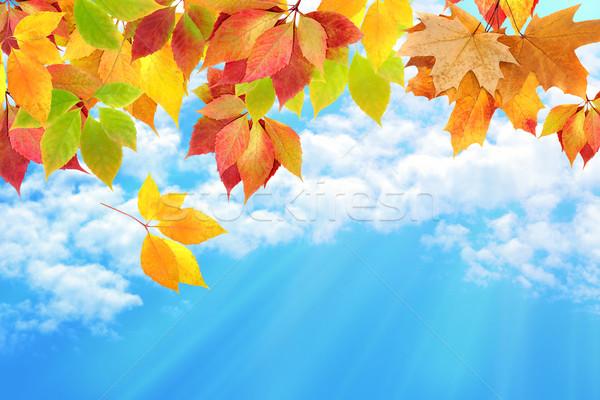 Ciel arbre orange vert bleu Photo stock © Iscatel