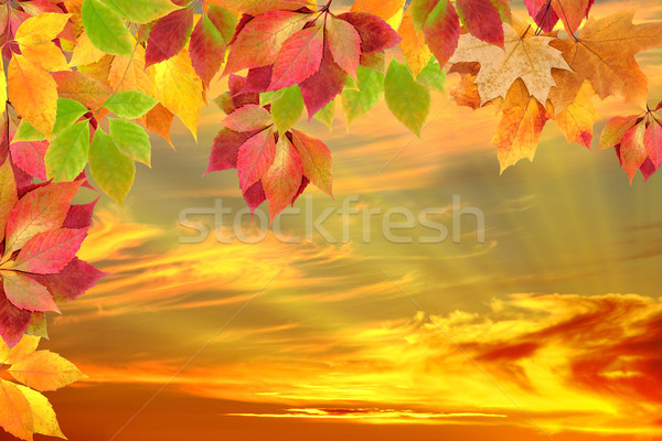 autumn leaves against the sunset Stock photo © Iscatel