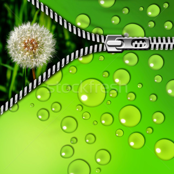 Pissenlit herbe zipper résumé design fond Photo stock © Iscatel