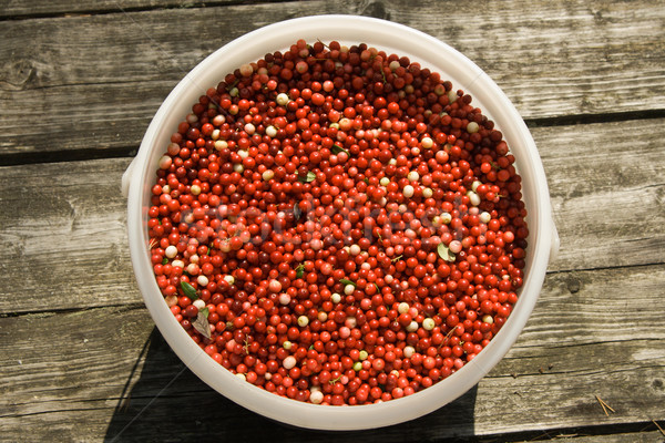 Full bucket of a red cowberry Stock photo © ISerg