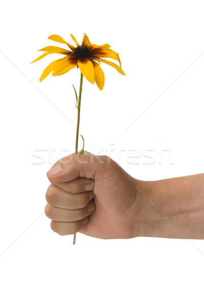 The stretched hand with a flower on a white background Stock photo © ISerg