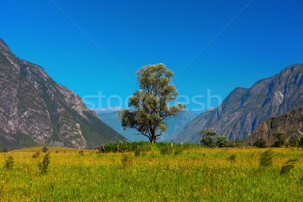 одиноко дерево гор небе трава природы Сток-фото © ISerg