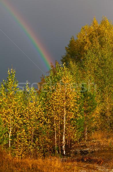 Autumn landscape. Rainbow over forest in sky Stock photo © ISerg