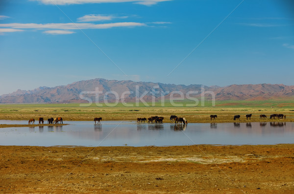 Herd horses on watering place. Mongolia Altai Stock photo © ISerg
