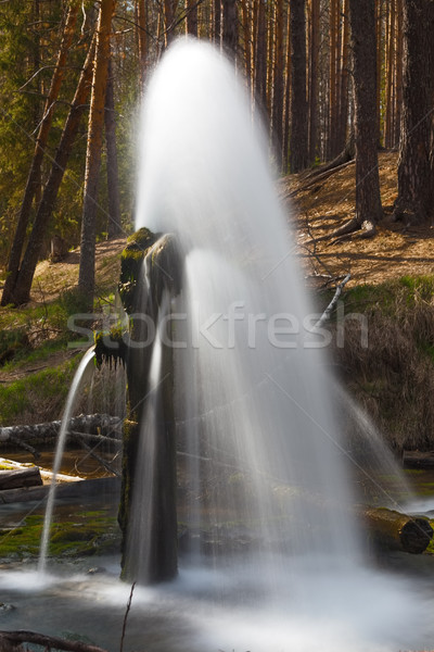 fountain in wood. beautiful landscape Stock photo © ISerg