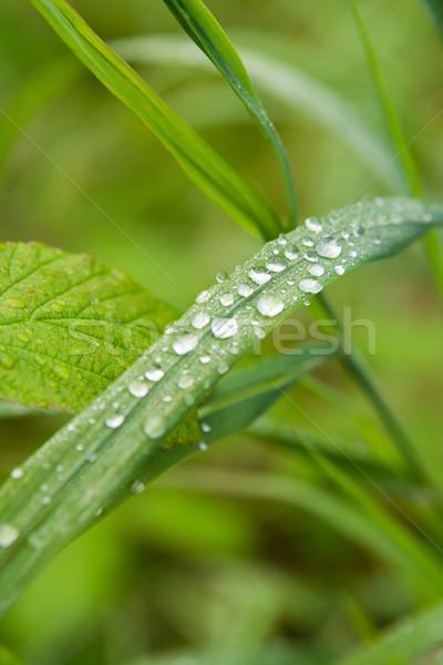 çiy çim ahşap manzara yaz yeşil Stok fotoğraf © ISerg