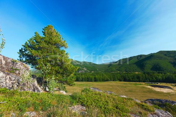 Montanhas belo paisagem sibéria madeira floresta Foto stock © ISerg