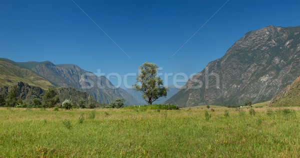 Lonely tree in mountains. Altai mountains. Russia Stock photo © ISerg