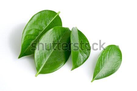 Verde isolato bianco natura foglia sfondo Foto d'archivio © italianestro