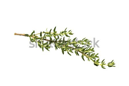 свежие филиала белый зеленый листьев завода Сток-фото © italianestro