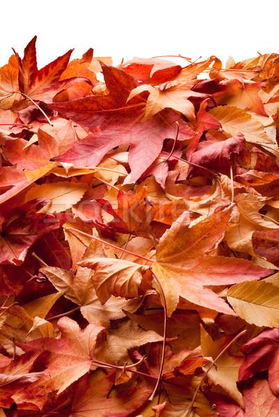 leafs in autumn Stock photo © italianestro