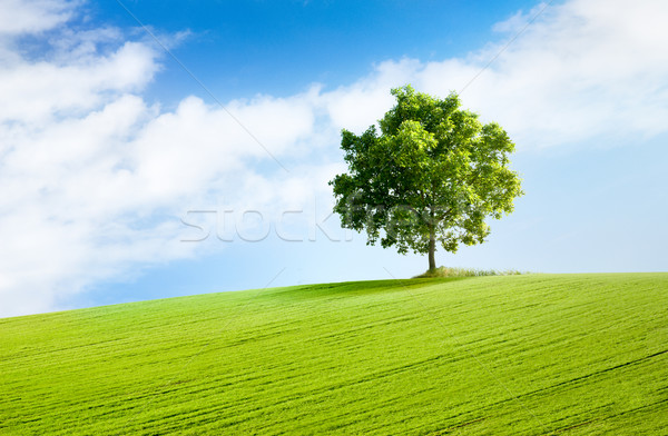 solitary tree in beautiful landscape Stock photo © italianestro
