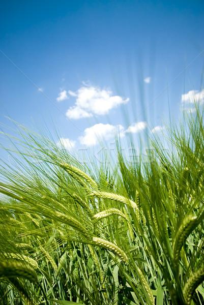 Stock foto: Innerhalb · Getreide · niedrig · Ansicht · zunehmend · up