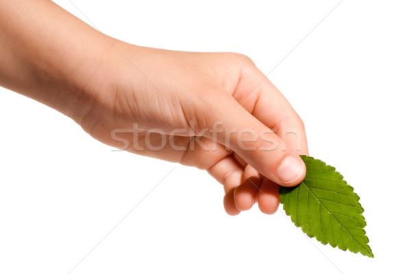 стороны лист молодые зеленый лист изолированный Сток-фото © italianestro