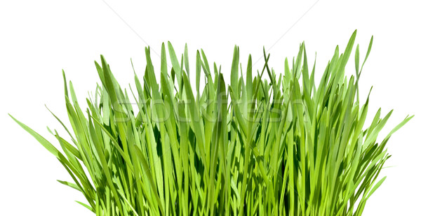 wisp of grass Stock photo © italianestro