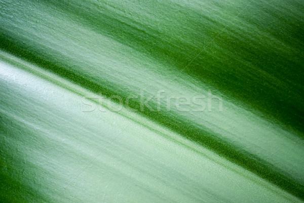 Hoja hoja verde macro vista naturaleza fondo Foto stock © italianestro