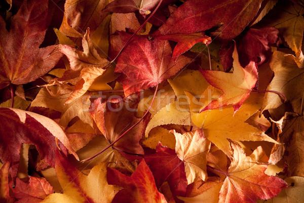 Otono colorido alfombra secado árbol resumen Foto stock © italianestro