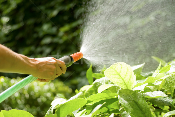 Sprinkler Homme main plantes jardin Photo stock © italianestro