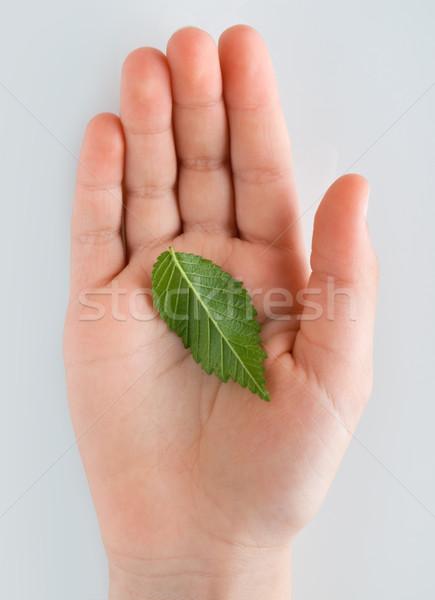 жизни стороны зеленый лист молодые природы здоровья Сток-фото © italianestro