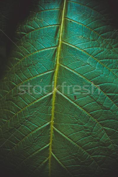 ビッグ 緑色の葉 レトロな コントラスト 表示 葉 ストックフォト © iunewind