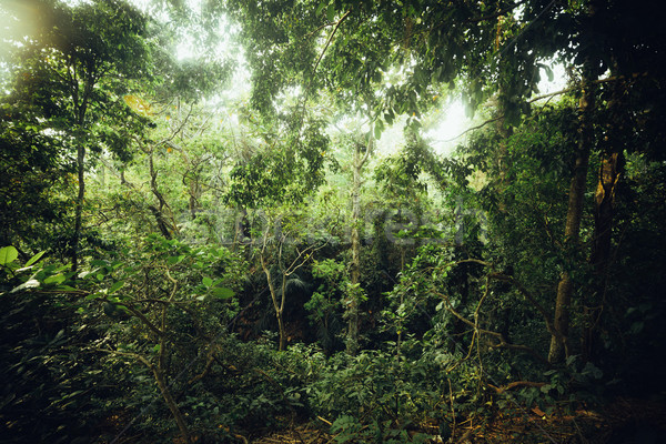 Tropical forest  Stock photo © iunewind