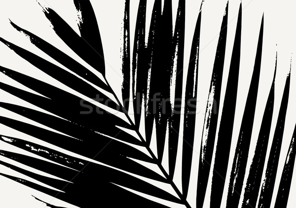 Pálmalevél poszter terv sziluett fekete krém Stock fotó © ivaleksa