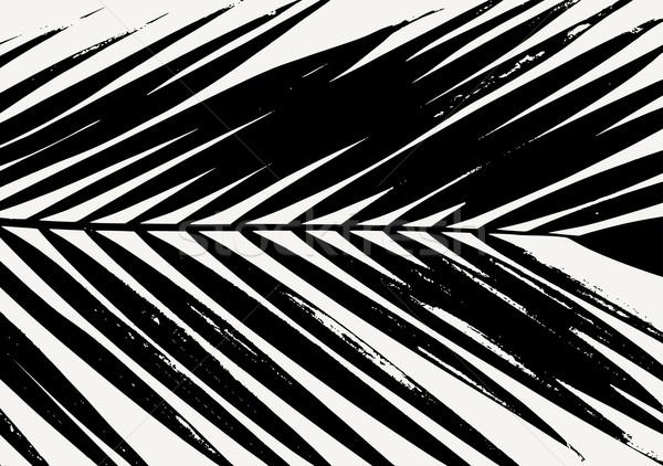 Feuille de palmier affiche design silhouette noir crème Photo stock © ivaleksa