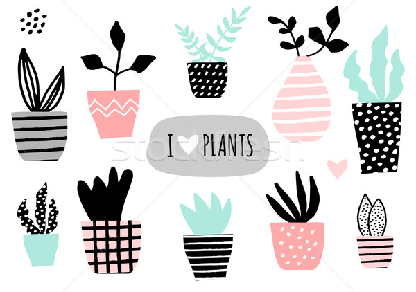 Stock photo: House Plants Collection