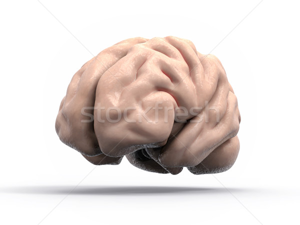 Isolated 3D Brain Illustration Stock photo © IvanC7