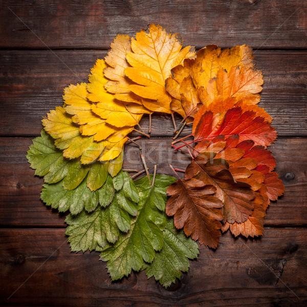 Vieux bois vintage automne laisse Photo stock © IvicaNS