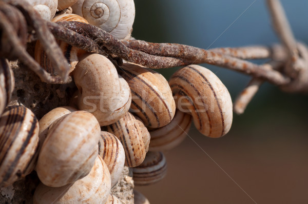 Colony of snails Stock photo © IvicaNS