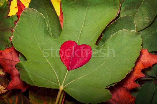 Rood hart vintage najaar bladeren Stockfoto © IvicaNS